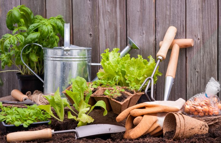 How to do Gardening Cheaply
